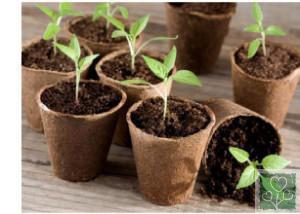 Маленькі тонкощі при вирощувані розсади перцю (Рассада, Обмен опытом)