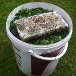 Готуємо власноруч – добрива з настояних трав (Эм  технология, Обмен опытом)