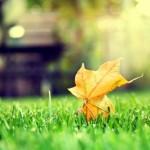 Необходимые работы на октябрь в цветнике  (Цветник, Обмен опытом)