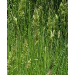 Грястица( Ежа) 0,5кг (Газонные травы)