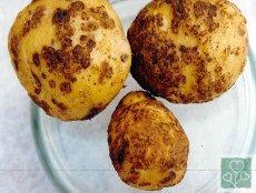 Парша на картоплі