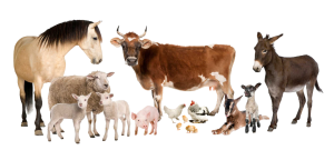 Для каких животных можно использовать ЭМ Бокаши? (Эм  технология, Обмен опытом)