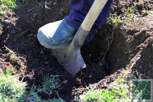 Копаємо ями під саджанці (Сад, Обмен опытом)