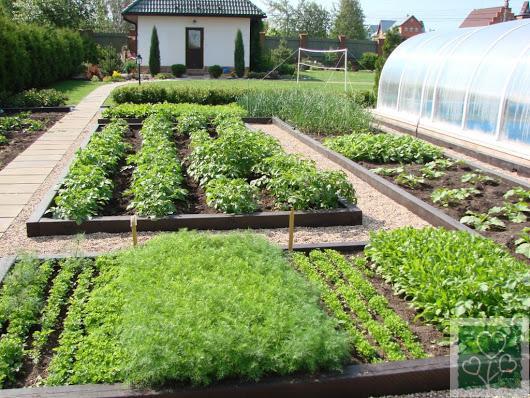 Травы помощники в огороде (Огород, Обмен опытом)