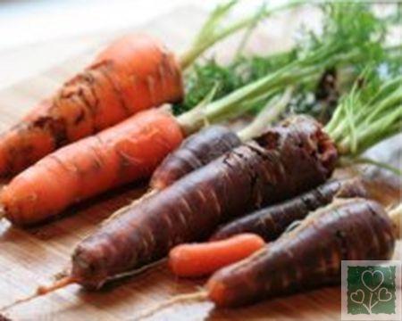 Морковная муха (Шкідники моркви, Вредители)
