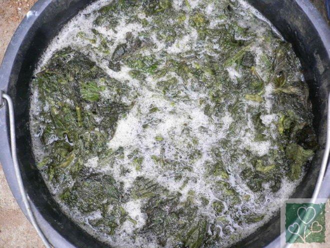 Крапива. Рецепты подкормок огородних культур. (Огород, Обмен опытом)