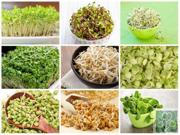 Польза пророщенных семян  (Здоровый образ жизни, Без рубрики)